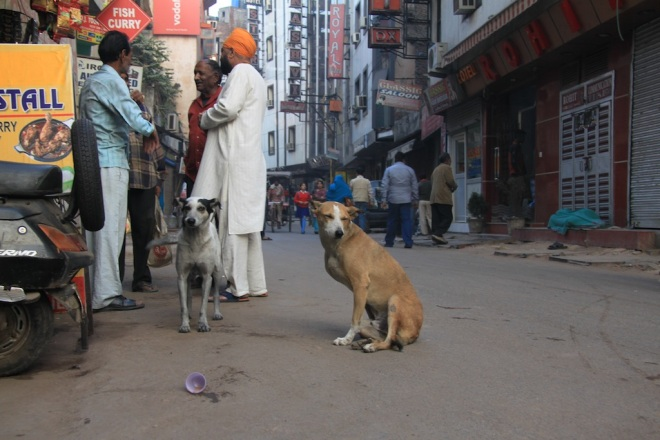 Desi dogs interact easily with humans belong only to themselves